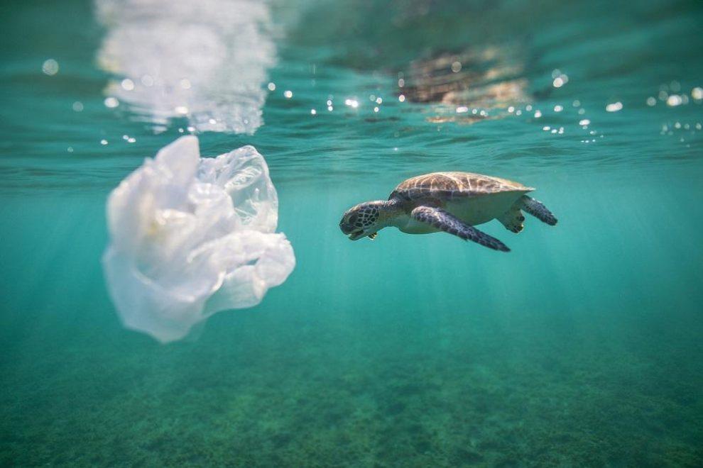 Plastic is causing extinction of sea reptiles