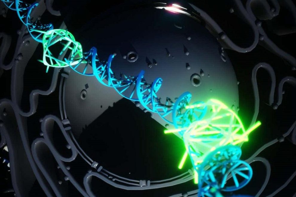 Rare four stranded DNA, first discovered
