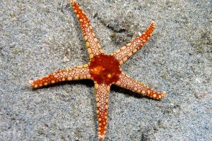 New starfish-like fossils suggest evolution is in action